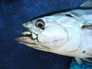 mac tuna head.jpg